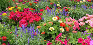 jeffco gardener fall cleanup tips chapter ii the annuals