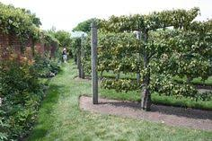 Fruit Garden Layout Espalier Of Fruit Trees Is But Demanding Tips From