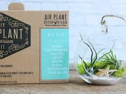 air plant care tillandsia watering tips air plant design studio