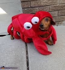 Lobster Costume Dachster Lobster Dog Costume