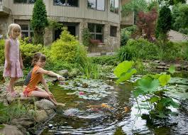 aquatic plants pond water lily supplies store warwick ny nj pa ct