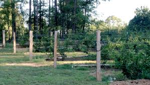 trellis system for blackberries u2013 rabbiteye farm