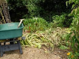 Squash Plant Diseases Pictures - garden clean up bonnie plants