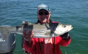 cape cod bay fishing report u2013 june 3 2015 u2013 salty cape