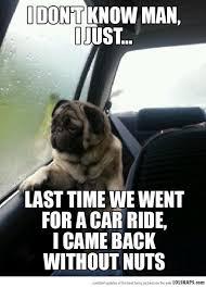 Depressed Pug Meme - introspective pug part 3 animal