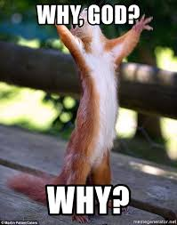 God Why Meme - why god why why squirrel meme generator