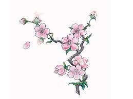 5 new cherry blossom tattoo designs