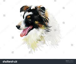 australian shepherd illustration border collie animal dog watercolor illustration stock vector