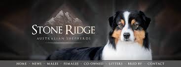 australian shepherd family dog stone ridge australian shepherds u2022 welcome