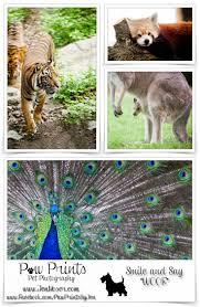 25 melhores ideias de fort wayne zoo no pinterest