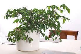 grünpflanzen im schlafzimmer welche pflanzen und palmen eignen sich für schlafzimmer