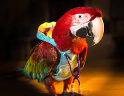 Parrot Decorations Home Things To Think About Before Getting A Parrot