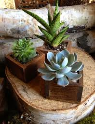 succulent in a tiny wooden box planter for home decor or wedding