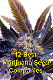 hardest plant to grow 137 best cannabis growing images on pinterest cannabis growing