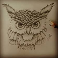 owls drawings illustrations