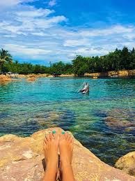 Florida why do people travel images Swimming with the dolphins at discovery cove in orlando florida jpg