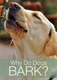 How To Train Dog To Stop Barking Why Does My Dog Bark So Much And What Does Barking Mean