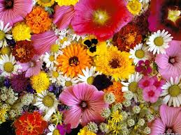 Images Flowers Home Carlton U0027s