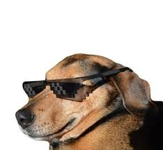 Dog With Glasses Meme - deal with it meme thug life black mlg shades frameless pixel