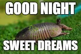 Armadillo Meme - armadillo meme generator imgflip memes i ve made pinterest