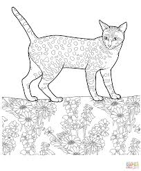 egyptian mau coloring page free printable coloring pages