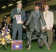 bluetick coonhound in florida hernando u0027s home of two top dog champions tampa bay times
