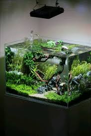 Aquascape Aquarium Plants Pin By Pamela Anderson On Different Type Fish Tanks