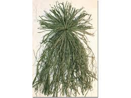 Gander Mountain Layout Blind Beavertail Ghillie Grass Bundles Blind Material Nylon