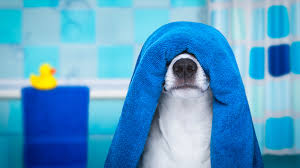 how to remove dog smells from your home a pet lover u0027s guide