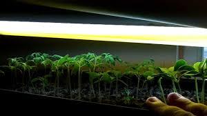 compost tea prevent damping off seedlings and indoor garden