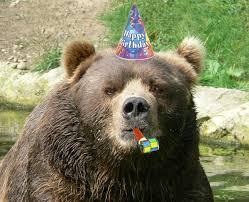 Smokey The Bear Meme Generator - bear meme generator the best bear of 2018