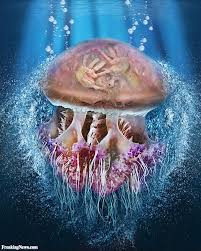 man trapped inside a jellyfish pictures freaking news