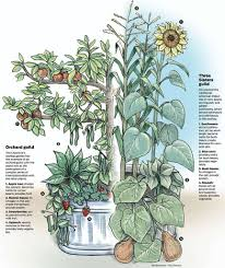 garden guilds plants that grow in harmony sfgate