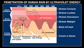 what does uv light do of human skin by ultraviolet light