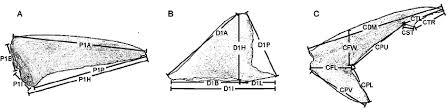 diagrams of pectoral fin a first dorsal fin b and caudal fin