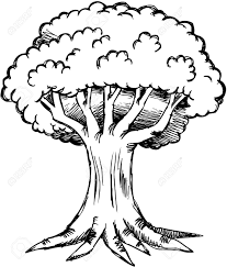 sketchy oak tree illustration royalty free cliparts vectors and