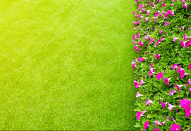 Fake Shrubs Can I Plant Living Plants In Artificial Grass Install It Direct