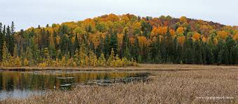 what day does thanksgiving always fall on fall colour report algonquin provincial park the friends of