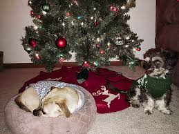 holiday gift guide for dog moms what to buy the dog mom in your life
