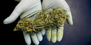 chambre culture complete chambre chambre de culture complete cannabis actualités de