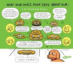 an illustrated guide to dog rover blog tips and tricks