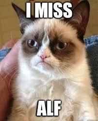 Alf Meme - i miss alf cat meme cat planet cat planet