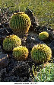 Largest Botanical Garden by Desert Botanical Garden Stock Photos U0026 Desert Botanical Garden
