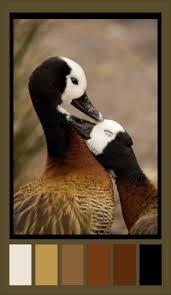133 best sea birds images on pinterest animals beautiful birds