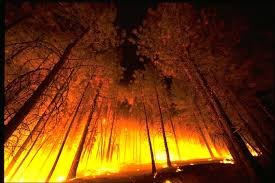 Wildfire Case Drop Rate by Protecting Your Business From Wildfire Ibhs
