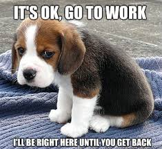 Get To Work Meme - sad puppy go to work memes quickmeme