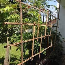 Can Cucumbers Grow Up A Trellis Growing Your Own Produce In Jakarta A Journey Bespoke