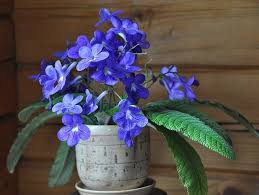 Beautiful Indoor Plants 29 Most Beautiful Houseplants You Never Knew About Houseplants
