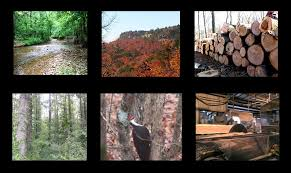 Arkansas Forest images Arkansas forestry resources cooperative extension service jpg