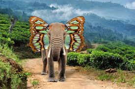 elephant with butterfly wings stock illustration illustration of